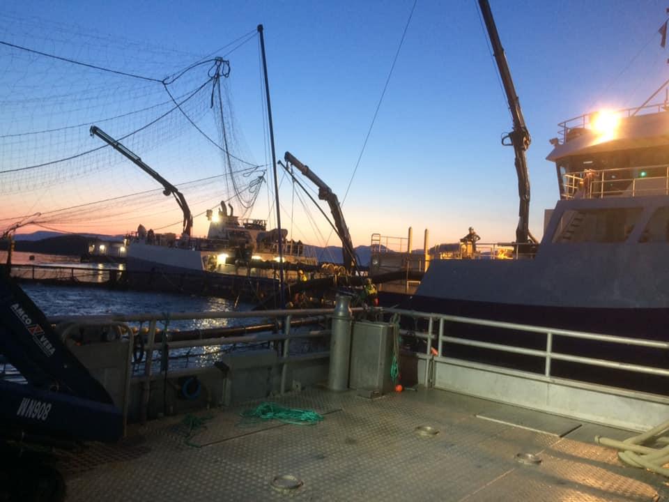 Inspeksjon fiskeoppdrett. Sjøtjenester Florø - sjotjenesterfloro.no